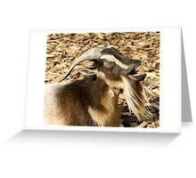 Billy Greeting Card