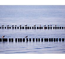 roost of the seagulls Photographic Print