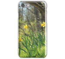 Daffodils on a sunny spring day iPhone Case/Skin