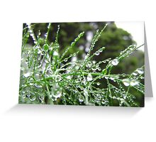 Fennel (Foeniculum vulgare) Greeting Card