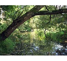 Backwater of the River Stour Photographic Print