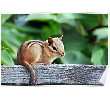 Chippy Chipmunk Poster