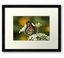 Another Viceroy. Framed Print
