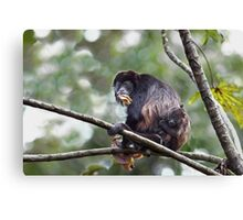 Howler monkey and baby Canvas Print