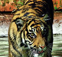 Sumatran Tiger by A90Six
