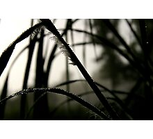 Shades Of Dew Leaf Photographic Print