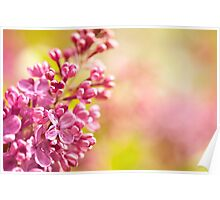 Lilac flowerets blooming bright Poster