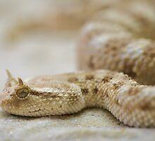 Snake by franceslewis