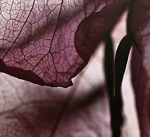 Memories of Nona by Danica Radman