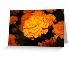 Marigolds at night Greeting Card