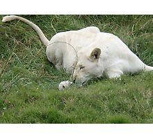 Lioness & Cub Photographic Print
