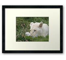 Newborn Cub Framed Print