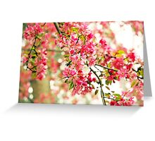 Pink and White Apple Blossoms  Greeting Card