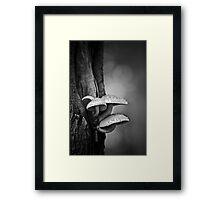 permanence Framed Print