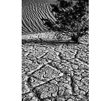Life in  Death Valley Photographic Print