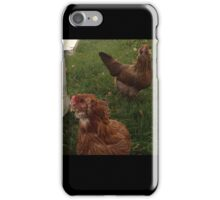Chickens iPhone Case/Skin