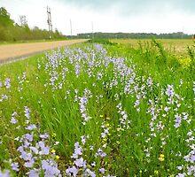 Wildflowers & Roadways by WildestArt