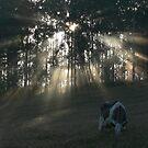 Sally's Sunrise - Lansdowne by louisegreen