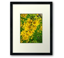 Small Yellow flowers 2 Framed Print