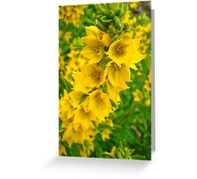 Small Yellow flowers 2 Greeting Card