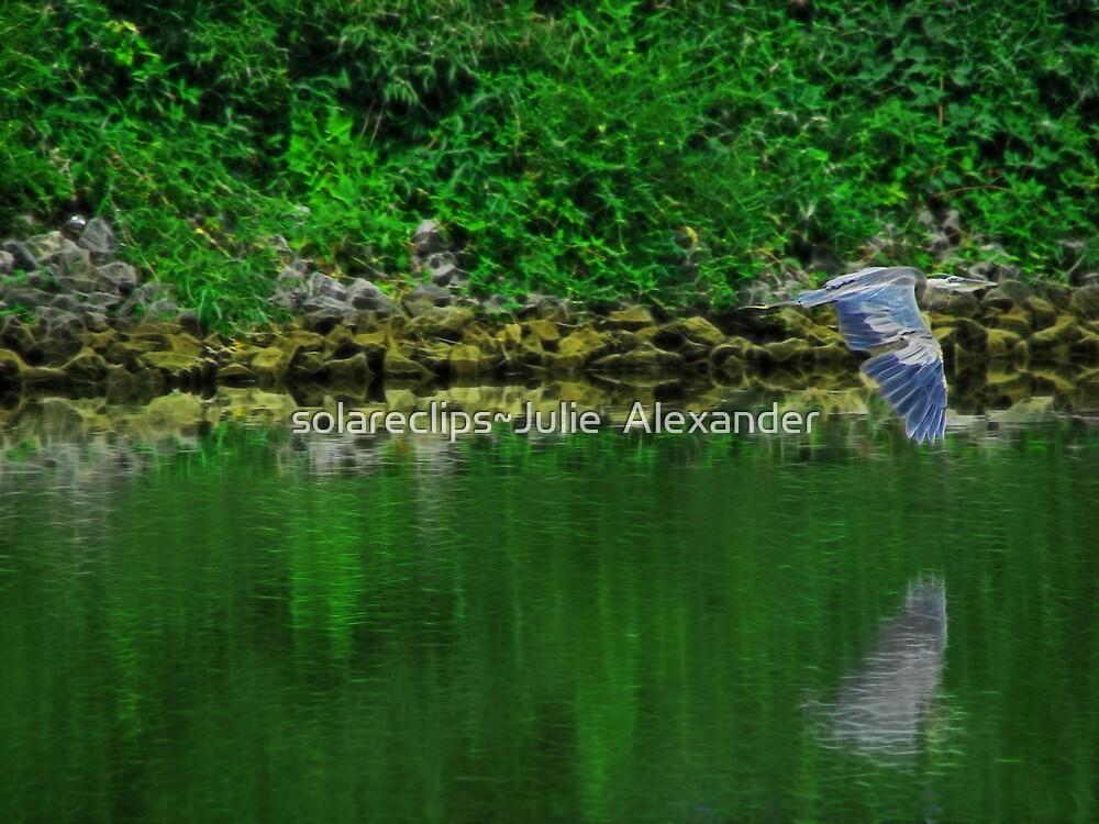 Blue Heron by solareclips~Julie  Alexander