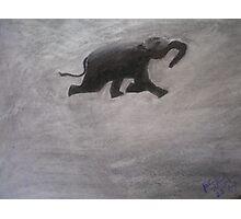 Swimming Elephant Photographic Print