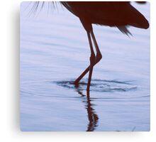 Heron Walking Canvas Print