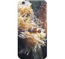 Clown Fish, Red Sea, Diving Egypt iPhone Case/Skin
