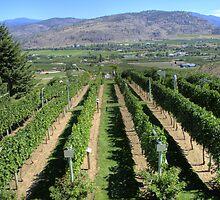 Tinhorn Creek Winery by PrairieRose