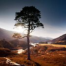 Pauline's tree by colin campbell