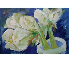 White Amaryllis Photographic Print