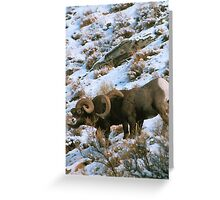 BIGHORN RAMS Greeting Card