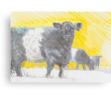 Belted Galloway Cows Canvas Print