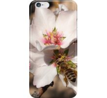 Bee on Apricot Blossom iPhone Case/Skin