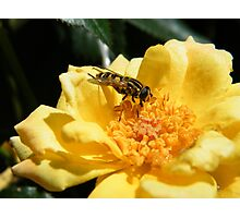 Matching insect Photographic Print