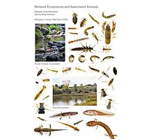 Wetland Ecosystems and Associated Animals Photographic Print