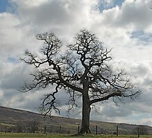 A Tree in Farndale by dougie1