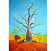 Broome Boab Tree Western Australia Photographic Print