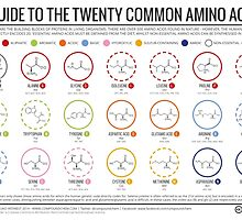 20 Amino Acids by Compound Interest