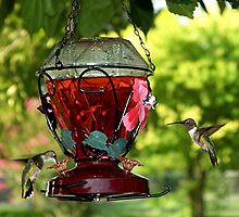 Two Little Hummers by Glenna Walker