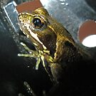 Frog in a Flowerpot by Luci Mahon