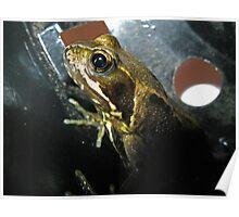 Frog in a Flowerpot Poster