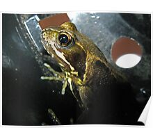 Frog in a Flowerpot Poster