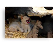 DINGO PUPS Canvas Print
