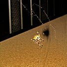 Biff the Spider by jansnow