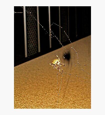 Biff the Spider Photographic Print