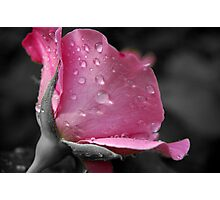 Rose Toned Photographic Print