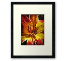 Daylily Macro Vector 001 Framed Print