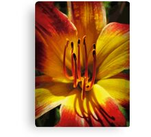 Daylily Macro Vector 001 Canvas Print
