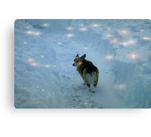 Luna in the wonderland Canvas Print
